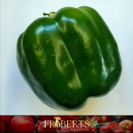 Bell Peppers (Green) (1lb)