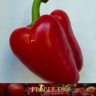 Bell Peppers (Red) (1lb)