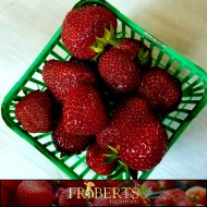 Strawberries, Ontario (qt)